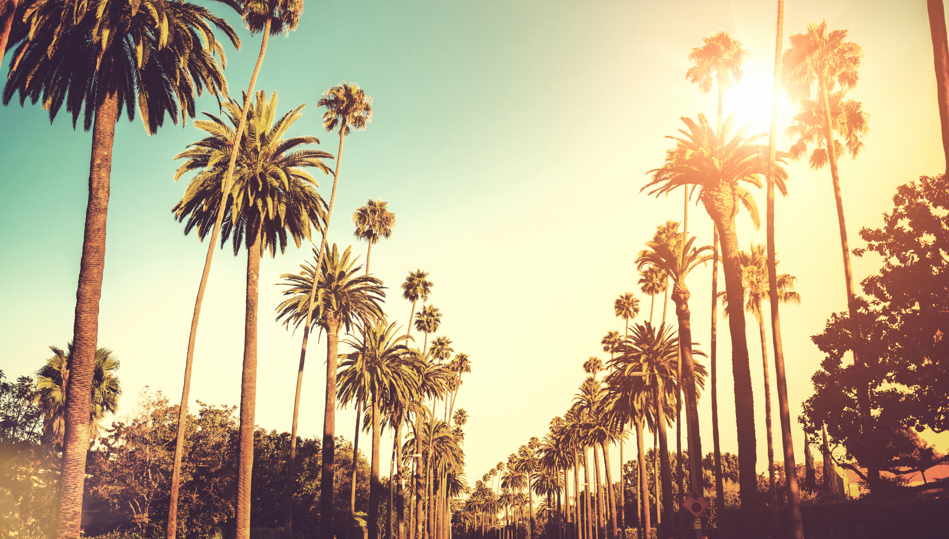 Los Angeles Palm Trees Ted Nguyen Usa Pr Social Media And